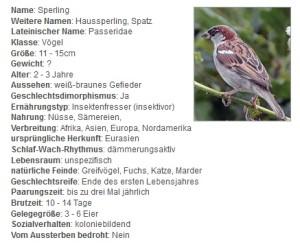 01 Der Sperling - Steckbrief