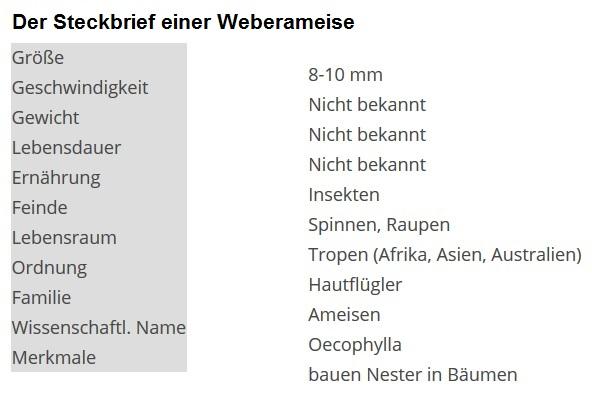 01 Die Weberameise - Steckbrief