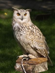eagle-owl-377192_960_720