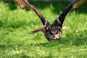 owl-3340957_960_720