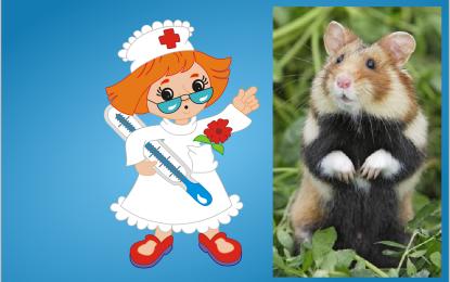 Typische Krankheiten beim Hamster