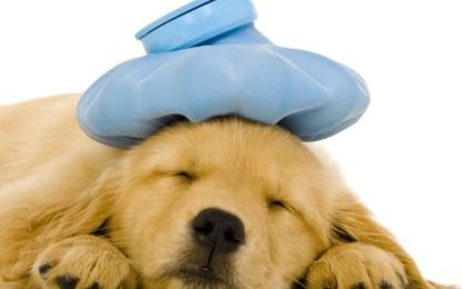 Das kranke Haustier – Vorsicht bei Selbstmedikation!!!