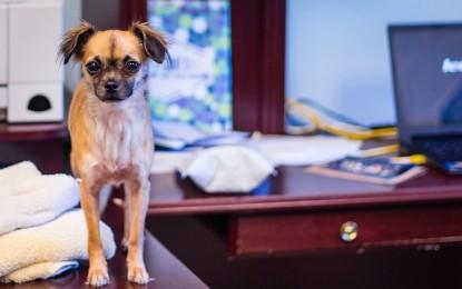 TÜV Rheinland: Einwilligung des Arbeitgebers für Haustiere am Arbeitsplatz erforderlich