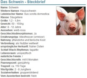 01 Das Schwein - Steckbrief