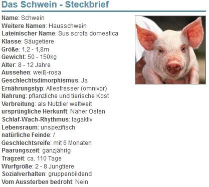 Das Schwein