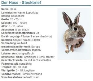 01 Der Hase - Steckbrief