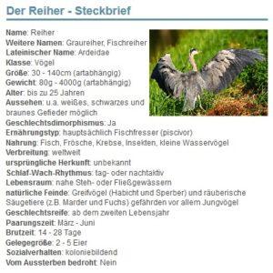 01 Der Reiher - Steckbrief