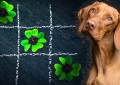 Testet und fördert die Intelligenz Eures Haustieres
