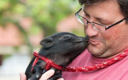 Interessante Informationen über Minischweine