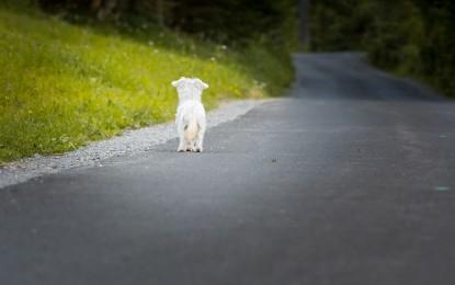 Was ist zu tun, wenn ich ein verlassenes Tier gefunden hab oder mir zugelaufen ist?