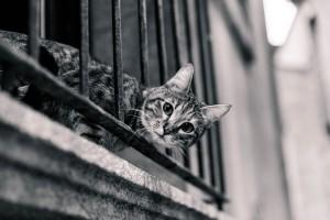 cat-2619631_960_720