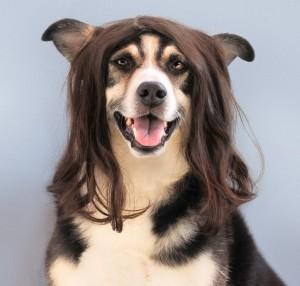 dog-1422857_960_720