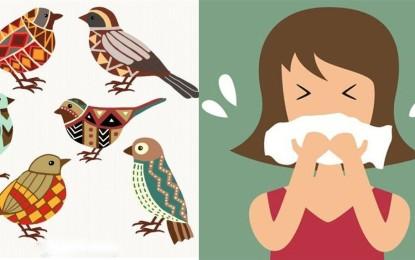 Was mach ich bei einer Vogel-Allergie?