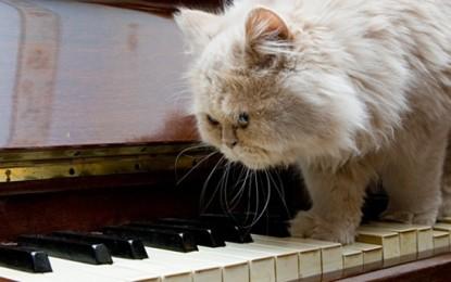 Klänge für Tiere – Musik kann Haustiere glücklich machen