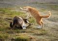 Die Machtkämpfe der Katzen und ihre Folgen