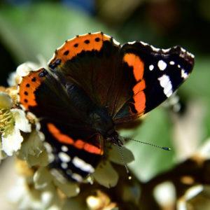 butterfly-3814202_960_720