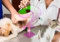Viele Hunde- und Katzenhalter nehmen die Impftermine ihrer Tiere nicht wahr.