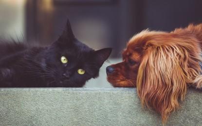 Geheimnis gelüftet: Was machen Tiere, wenn sie allein zu Hause sind?
