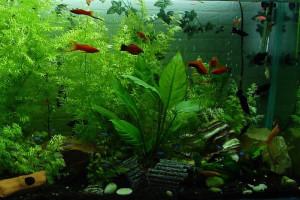 aquarium-323717_960_720