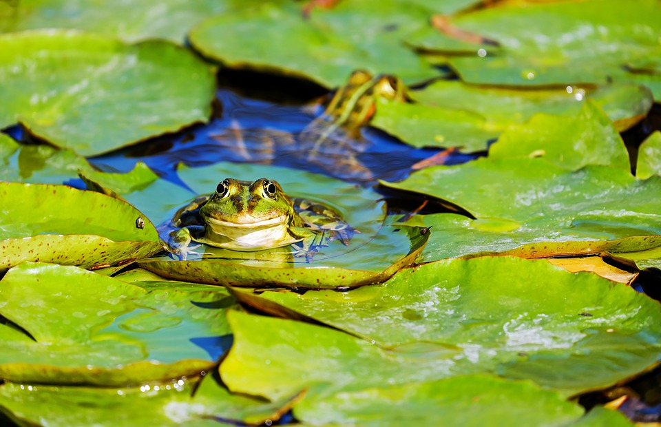 frog-3312038_960_720