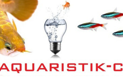 Die Fische erobern den Online-Markt