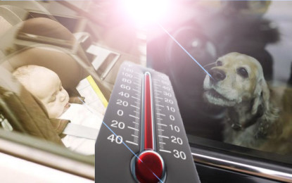 TÜV Rheinland: Kinder und Tiere bei Hitze niemals im Fahrzeug lassen