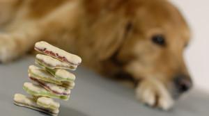 Hundekuchen-Stapel mit Hund im Hintergrund