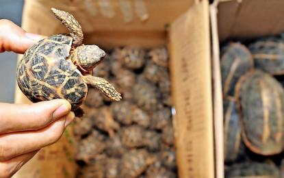 Der grausame Wildtierhandel