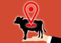 Der Vital-Tracker für die Kuh: Dieser Sensor misst Fieber, erkennt Brunst & rettet Leben