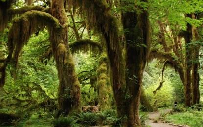 Neue Regenwaldschutzinitiative wandelt erstmals Ölpalmplantagen in Regenwald um