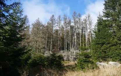 Nachhaltig für Klima und Artenvielfalt engagiert: SMC unterstützt Aufforstungsprojekt
