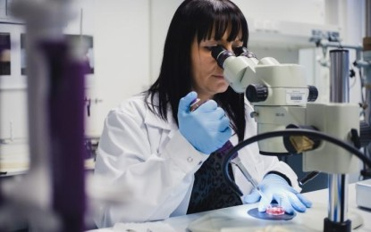 Künstlicher Darm soll Tierversuche eingrenzen