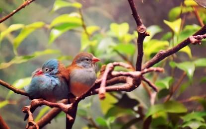 Artenreiche, deutsche Wälder: Vogelbestände nehmen zu