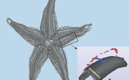 Vom Seestern zum Flugzeugflügel – Biologisch inspirierte Entwicklung von Gelenken für bewegliche Strukturen