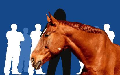 consinion setzt beim Coaching auf Pferde als Co-Trainer