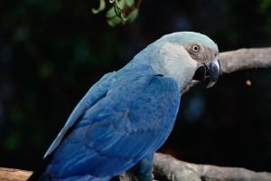 01-og-bird-extinctions-nationalgeographic_1147184