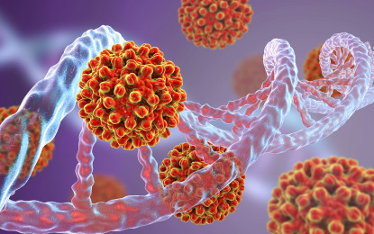 Der Tarnung des Hepatitis-B-Virus auf der Spur