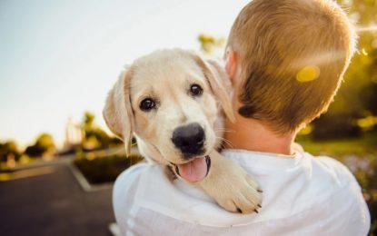 Happy Pet Club als große Informationsquelle für Haustierbesitzer