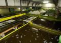 Fischerzeugung 2019 in Aquakulturen um 2,4 % gestiegen