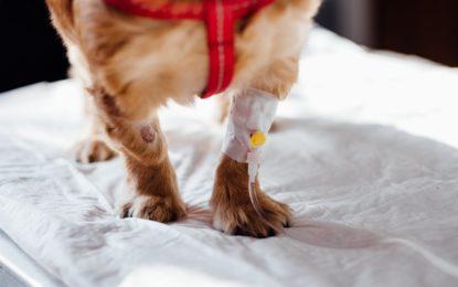 Bayer schließt Veräußerung seiner Geschäftseinheit Animal Health an Elanco ab