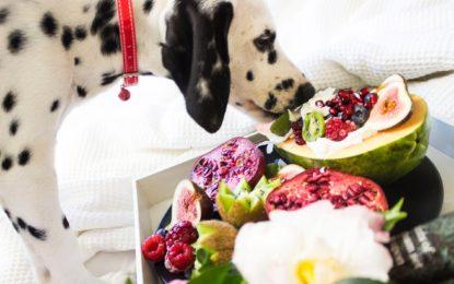 Fünf Tipps für eine gesunde Hundeernährung