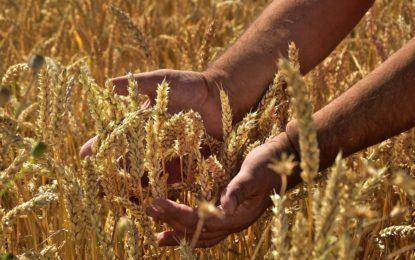 """Neue Kampagne zeigt """"Gesichter der Landwirtschaft"""""""