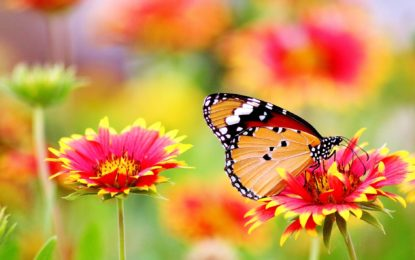 Blütenpollen effizient bestimmen