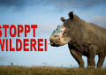 Großflächige Erhebungen zur Säugetier-Vielfalt sind für ein effektives Vorgehen gegen Wilderei notwendig