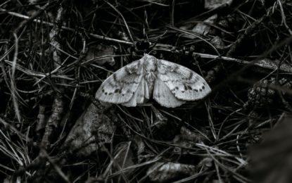 Fataler Insektenstaubsauger: Uferbeleuchtung