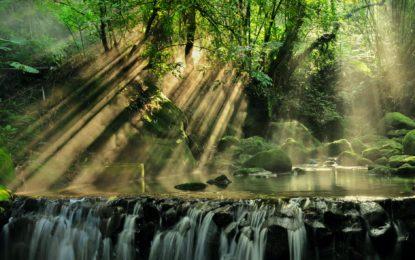 Freie Bahn für wilde Tiere: Weiterer Meilenstein – für Wildtierkorridor in Borneo durch Umwandlung von Ölpalmenplantagen in Regenwald