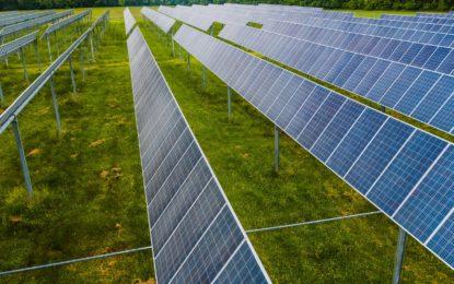 Für Artenschutz und Vielfalt: Solarkraftwerke als Biotope nutzen
