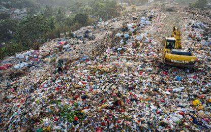"""""""Biobasierte Produkte, Bioplastik, Biomassennutzung aus Schilf"""""""