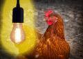 LED Gen 3 Beleuchtung für Geflügelställe