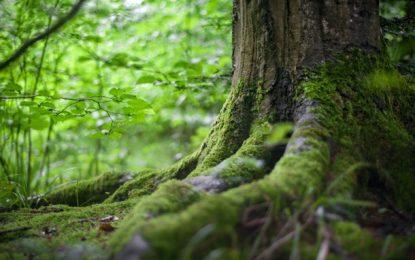 Tag des Baumes: Wälder immer mehr von Müll bedroht